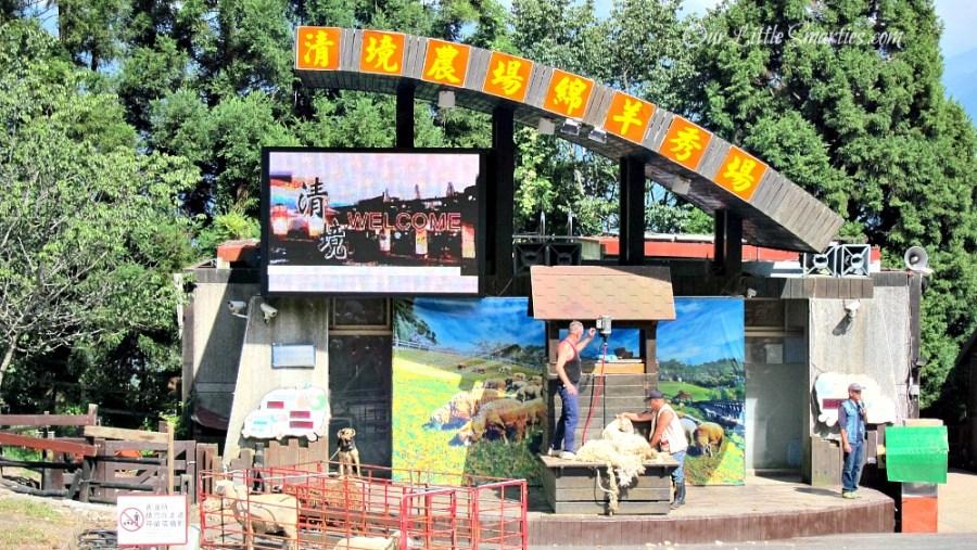 Cingjing Sheep Show 2