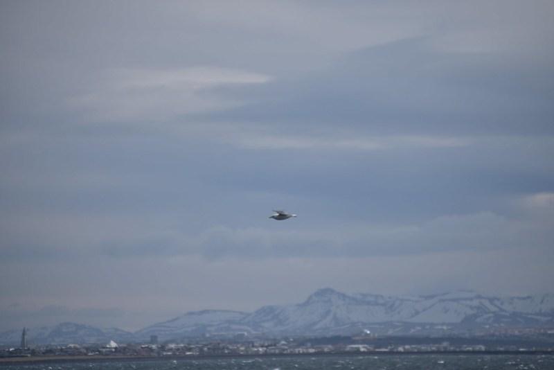 27/4 Whale Watching (zonder walvissen)