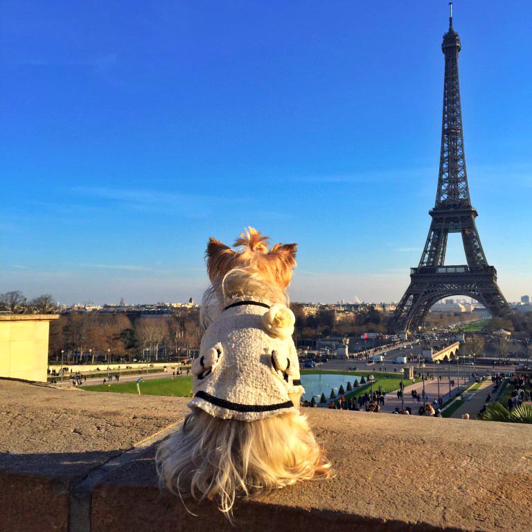 Viajar de París a Londres: Pau mirando la Torre Eiffel de París (Francia) viajar de parís a londres - 24217678941 9d78f9241a o - Viajar de París a Londres en coche y con perro
