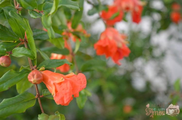 Fotografia: Flores e Frutos