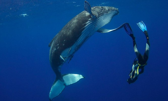 world-whale-day-photos-33__880