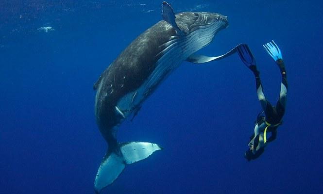 world-whale-day-photos-33__880