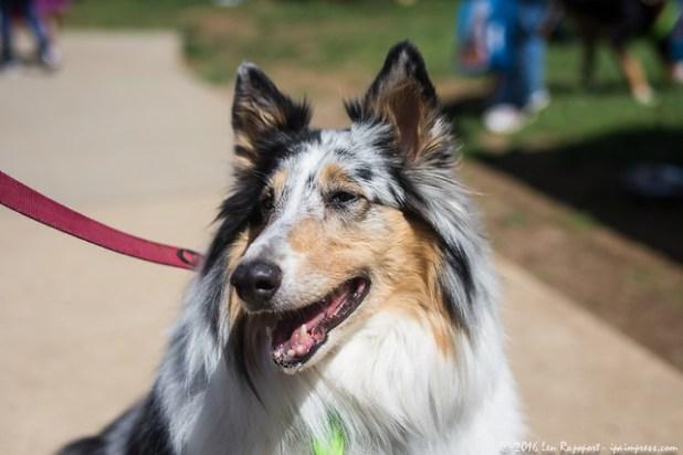 Monmouth County SPCA 2016 Dog Walk