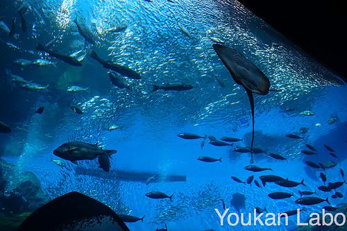 仙台うみの杜水族館22