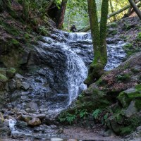 Uvas Canyon Hike