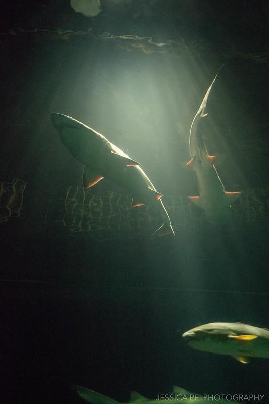 Sea World Orlando Sharks
