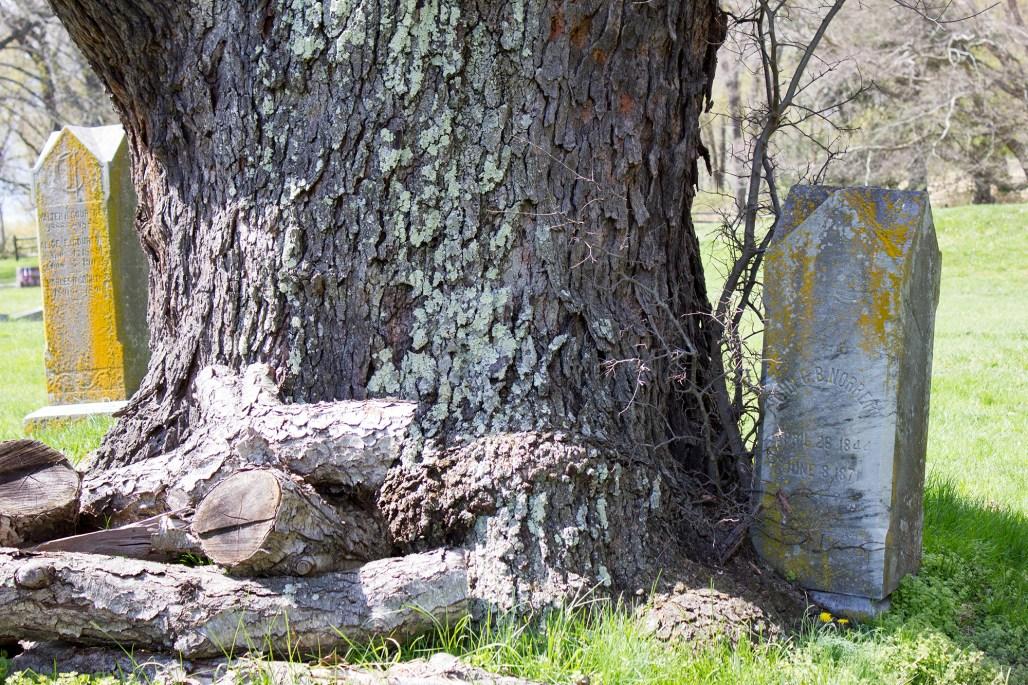 brandywine-battlefield-revolutionary-war-chadds-ford-pa-tree-norrett-grave