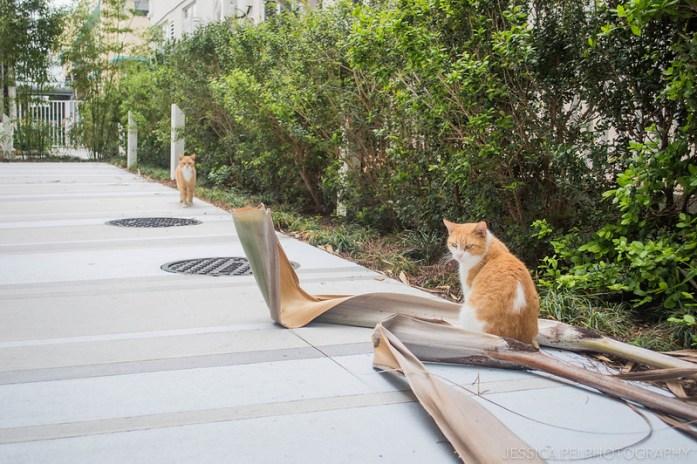 Miami Beach Cats