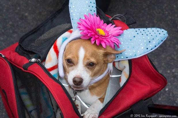 Easter Bonnet Parade 2016
