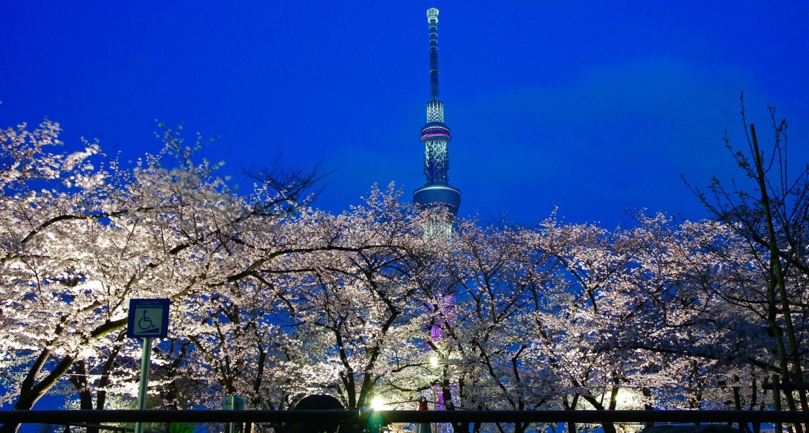 Asakusa Yozakura - Night time illumination of cherry blossoms