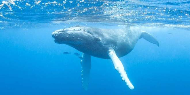 baleines-drone-aide