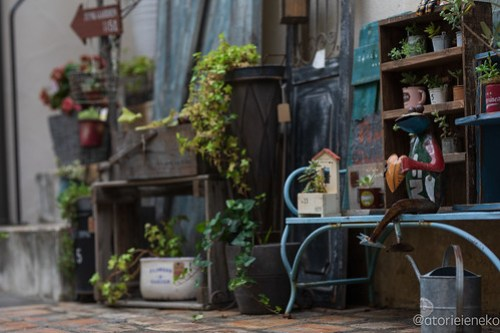アトリエイエネコ Cat Photographer 42713053671_1b383c2ab7 高槻 二十四節記 しっぽ天使主催【雑貨店&猫里親探し】 1日1猫!  高槻ねこのおうち 高槻 里親様募集中 猫写真 猫 子猫 大阪 保護猫 二十四節記 カメラ しっぽ天使 Kitten Cute cat