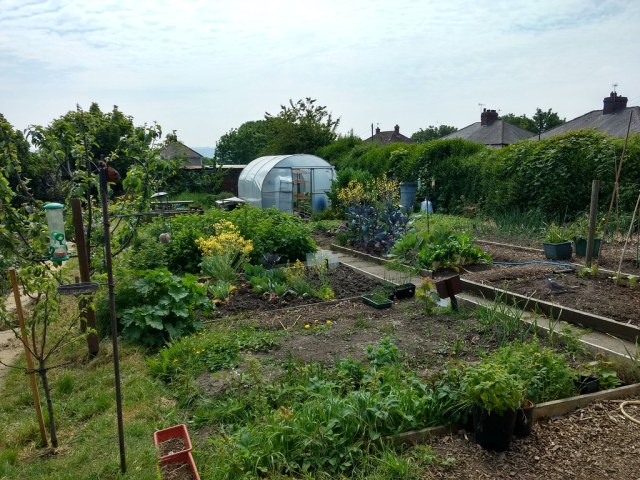 Hope Community Allotment
