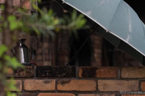 アトリエイエネコ Cat Photographer 41813456725_763020a3cf 高槻 二十四節記 しっぽ天使主催【雑貨店&猫里親探し】 1日1猫!  高槻ねこのおうち 高槻 里親様募集中 猫写真 猫 子猫 大阪 保護猫 二十四節記 カメラ しっぽ天使 Kitten Cute cat