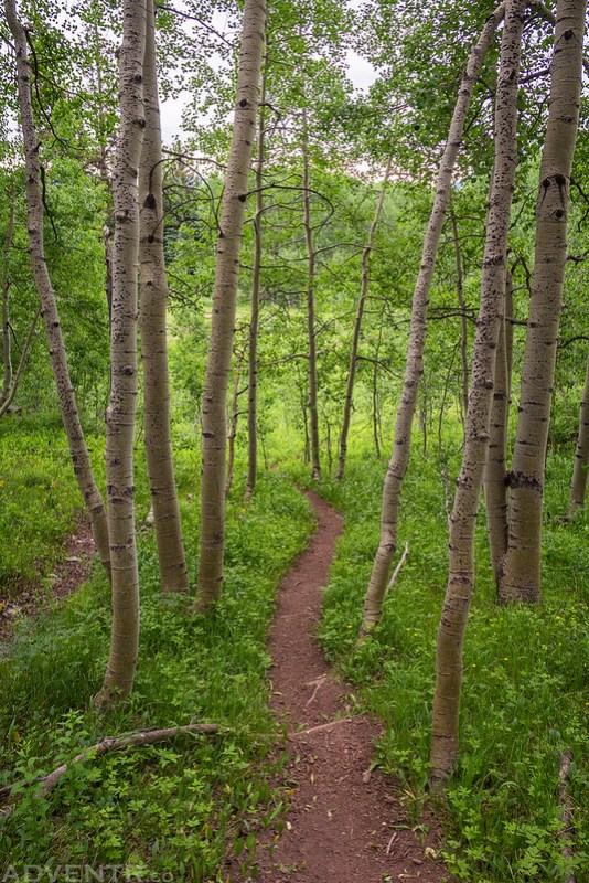 The Dyke Trail