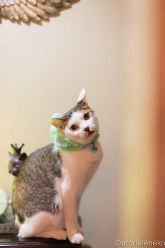 アトリエイエネコ Cat Photographer 42046507570_d852fe6ff3 1日1猫!保護猫カフェウリエルへ行ってきた(1/2)♪ 1日1猫!  里親様募集中 猫写真 猫カフェ 猫 大阪 初心者 写真 保護猫カフェウリエル 保護猫カフェ 保護猫 中崎町 スマホ カメラ ウリエル Kitten Cute cat