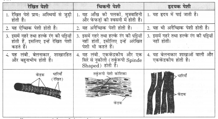 NCERT Solutions for Class 9 Science Chapter 6 (Hindi Medium) 4