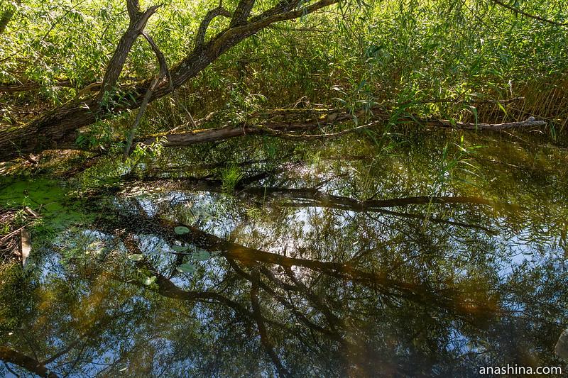 озеро Мстино