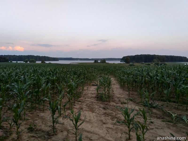 Кукурузное поле, Пестовское водохранилище