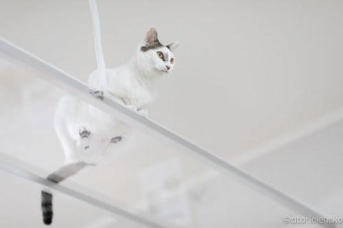 アトリエイエネコ Cat Photographer 28111632017_0d2448bb6e 1日1猫!保護猫カフェけやきさんに又又行って来た!(1/2) 1日1猫!  里親様募集中 猫写真 猫カフェ 猫 子猫 大阪 初心者 写真 保護猫カフェけやき 保護猫カフェ 保護猫 カメラ Kitten Cute cat
