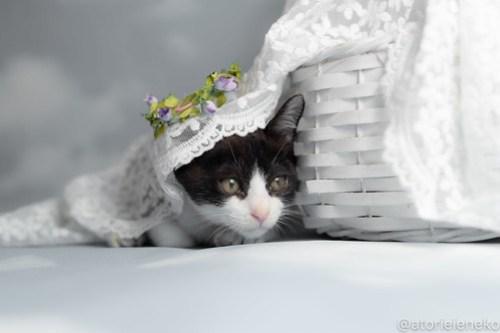 アトリエイエネコ Cat Photographer 43803608072_2608d6fce0 1日1猫!おおさかねこ俱楽部 里活中のチルチルちゃんです♪ 1日1猫!  里親様募集中 猫写真 猫カフェ 猫 子猫 大阪 初心者 写真 保護猫カフェねこんチ 保護猫カフェ 保護猫 ハチワレ ニャンとぴあ カメラ おおさかねこ倶楽部 Kitten Cute cat