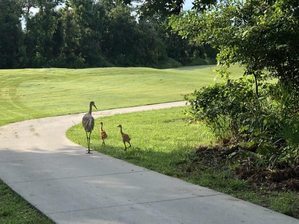 Sand HIll Crane Family 4