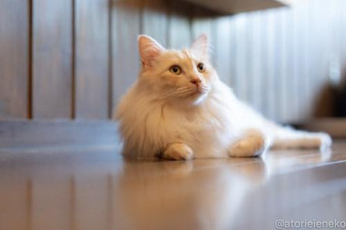 アトリエイエネコ Cat Photographer 28534176317_17b6d5e1c2 1日1猫!CaraCatCafe天使に会いに行って来ました♪ 1日1猫!  里親様募集中 猫 子猫 大阪 初心者 写真 保護猫カフェ 保護猫 スマホ カメラ Kitten Cute cat caracatcafe