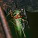Wasp Hugs