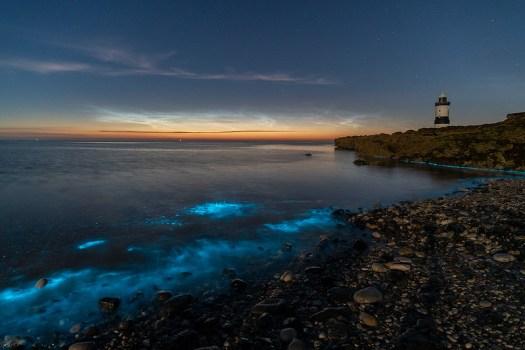 'Bioluminescence, beneath Noctilucence' - Anglesey