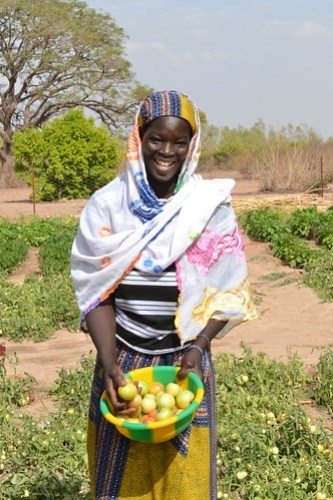 Sitan Coulibaly. Photo credit:  Mohamed Lamine Sinayoko/WorldVeg Center.