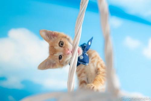 アトリエイエネコ Cat Photographer 43134381924_a5a727ef30 1日1猫!おおさかねこ俱楽部 里活中のナオトくんです♪ 1日1猫!  里親様募集中 茶トラ 猫写真 猫カフェ 猫 子猫 大阪 初心者 写真 保護猫カフェ 保護猫 ニャンとぴあ スマホ カメラ おおさかねこ倶楽部 Kitten Cute cat