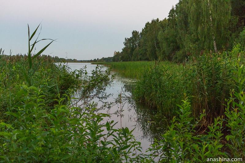 Заводь, озеро Мстино