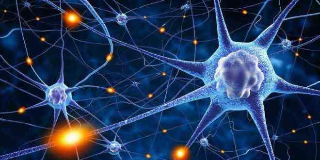 protiéne-chaperon-maladie-découverte-explication