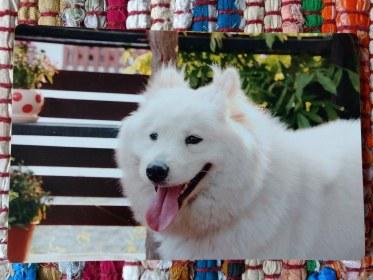 Coco the hostel dog