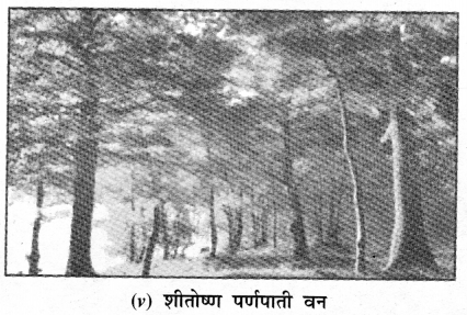 NCERT Solutions for Class 7 Social Science Geography Chapter 6 (Hindi Medium) 6