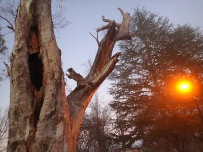 Gum tree hollow at sunrise #marineexplorer