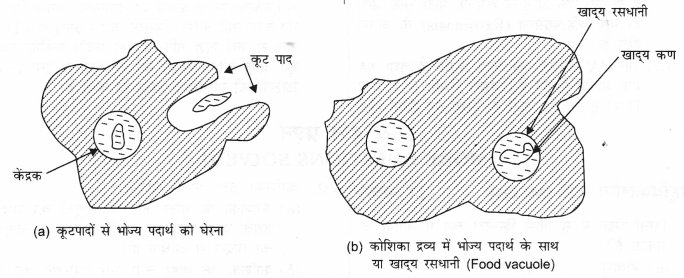 NCERT Solutions for Class 9 Science Chapter 5 (Hindi Medium) 5