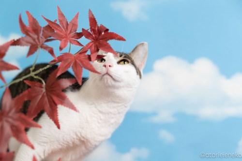 アトリエイエネコ Cat Photographer 29632393527_355df174d5 1日1猫!「かりぐらしの猫たち」さんのシェルターへ行って来た♪(2/2) 1日1猫!  里親様募集中 猫写真 猫 子猫 大阪 吹田 初心者 写真 保護猫 かりぐらしの猫たち Kitten Cute cat