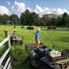 Samuel likes to count the cows after we move them. #farmkids #familyfarm #triplejfarmsc #grassfed #localbeef #localfood