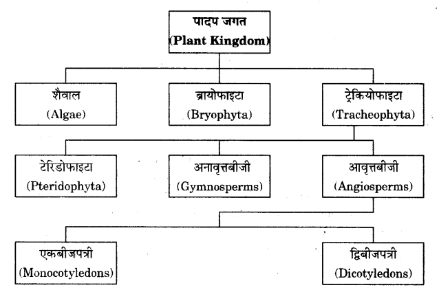 UP Board Solutions for Class 9 Science Chapter 7 Diversity in Living Organisms l 13