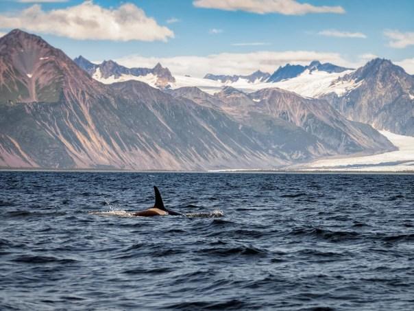 Orca and Glacier