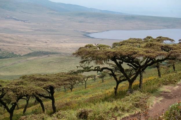Ngorongoro crater rim