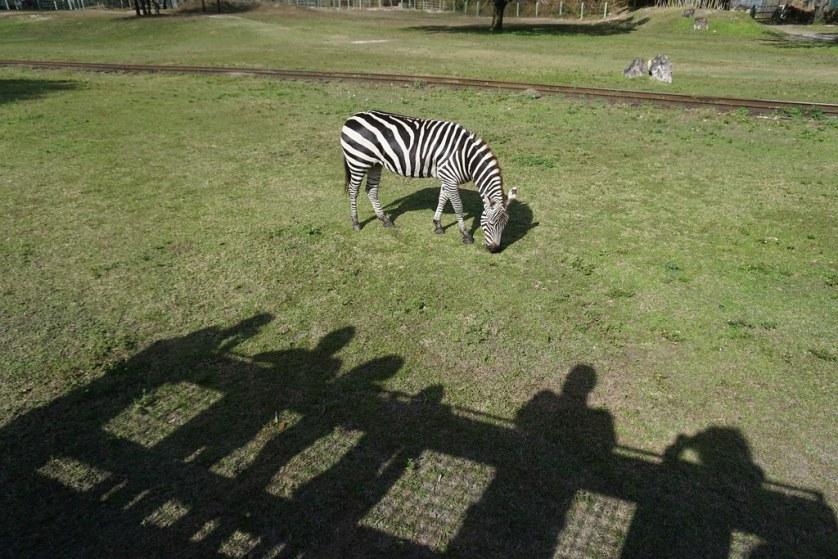 Me and My Shadows on the Serengeti Safari® Tour at Busch Gardens Tampa Bay, Fla., Dec. 2016.