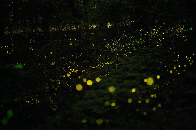 Iwahig Firefly Watching, 50+ Things to Do in Puerto Princesa, Tourist Spots Survive Travel (7)