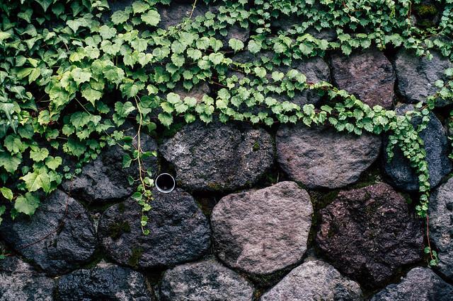 石垣のねむり