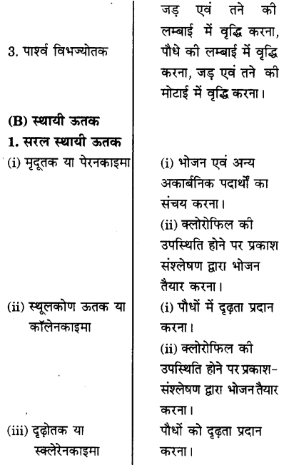 UP Board Solutions for Class 9 Science Chapter 6 Tissues l 1.1