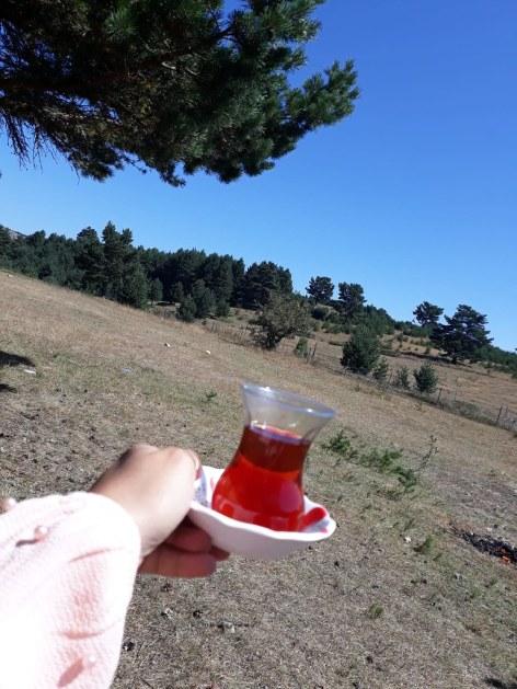 tosya çaybası yaylası