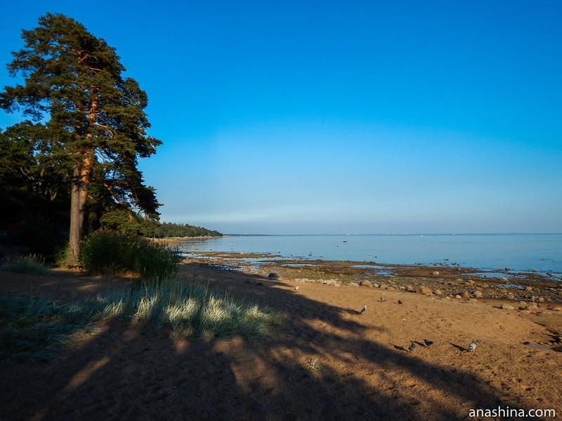 Балтийский берег в Зеленогорске