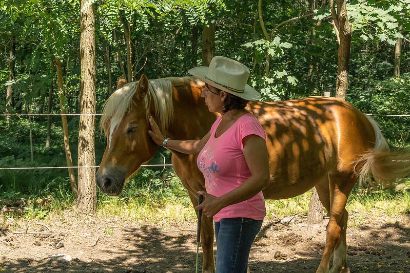 Cavalli nel Bosco