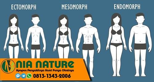 Perbedaan Mesomorph Endomorph Dan Ectomorph